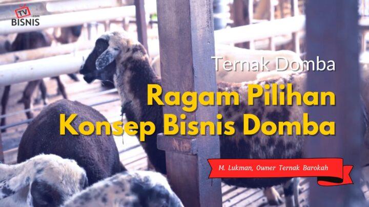 Ragam Pilihan Konsep Bisnis Ternak Domba